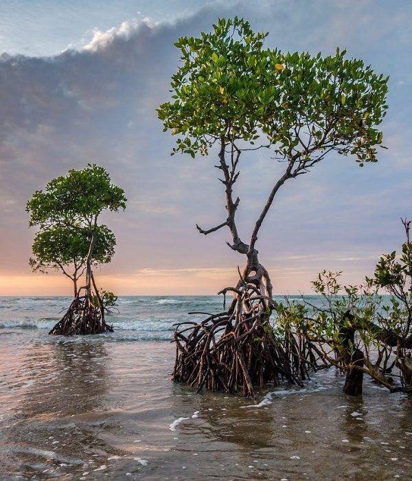 Mangroves increase food security